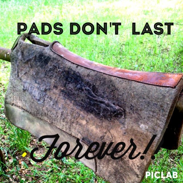 Saddle Pads and Padding - Don Gonzales Saddlery